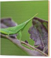 Long Grasshopper Wood Print