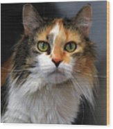 Long Haired Calico Cat Wood Print