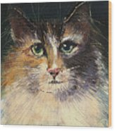 Long Haired Cat Wood Print