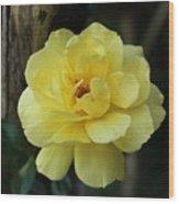 Single Yellow Rose  Wood Print