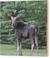 Long Legged Moose Wood Print