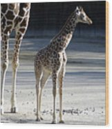 Long Legs - Giraffe Wood Print
