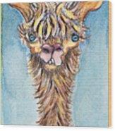 Long Neck Alpaca Wood Print