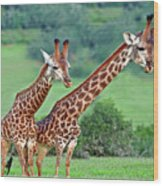 Long Necks Together Wood Print