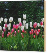 Long Stem Tulips Wood Print