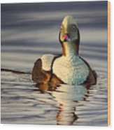 Long Tail Duck Wood Print