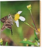 Long-tailed Skipper Butterfly Wood Print
