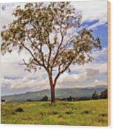 Long Tree Shenandoah Valley West Virginia  Wood Print