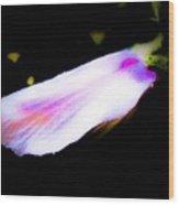 Long Unopened Hibiscus Flower Wood Print