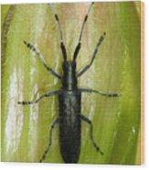 Longhorn Beetle Wood Print