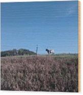 Longhorn In Kansas Wood Print
