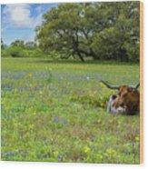 Longhorn Spring Wood Print