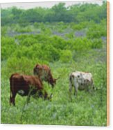 Longhorns - Grazing In The Wilds Wood Print