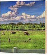 Longhorns At The Ranch Wood Print