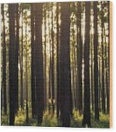 Longleaf Pine Forest Wood Print