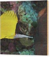 Longnose Butterflyfish Wood Print by Steve Rosenberg - Printscapes