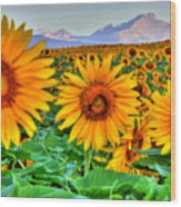 Longs Sunflowers Wood Print