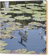 Longwood Lillies Wood Print by Randy Ford