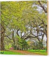 Longwood Plantation In Spring Glory Wood Print