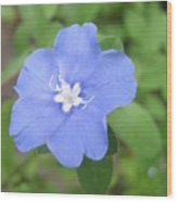 Lonly Blue Flower Wood Print