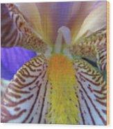 Look Inside Wood Print