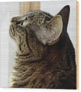 Look Out Window Tabby Cat Wood Print