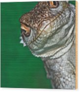 Look Reptile, Lizard Interested By Camera Wood Print