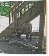 Look Who's Under The Stairs Wood Print