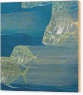 Lookdown Fish Selene Sp. In Motion Wood Print