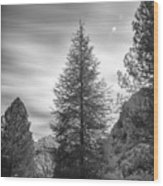 Looking For The Sky Into The Woods Wood Print