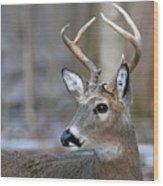 Looking Back Whitetail Deer Wood Print