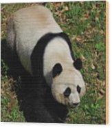 Looking Down At A Cute Giant Panda Bear Wood Print