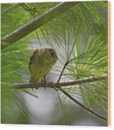 Looking Down - Common Sparrow - Passer Domesticus Wood Print