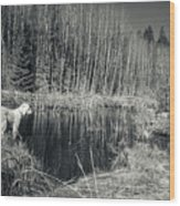 Looking For Beaver Wood Print