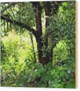 looking into the Jungle Wood Print