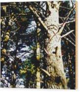 Looking Skyward Wood Print