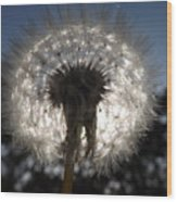 Looking Through A Dandelion Wood Print by Rebecca Cearley