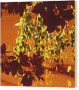 Looking Through Leaves Into Pond Wood Print