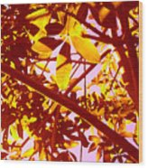 Looking Through Tree Leaves 2 Wood Print