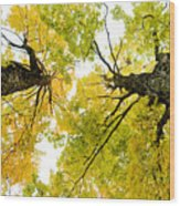 Looking Up At Fall Wood Print