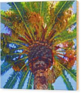 Looking Up At Palm Tree  Wood Print