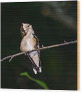 Looking Up - Hummingbird Wood Print