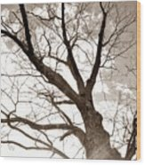 Looking Up In Sepia Wood Print