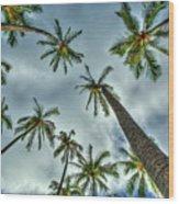 Looking Up The Hawaiian Palm Tree Hawaii Collection Art Wood Print