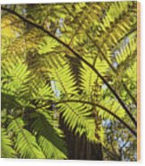 Looking Up To A Beautiful Sunglowing Fern In A Tropical Forest Wood Print