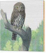 Lookout- Northern Pygmy-owl Wood Print