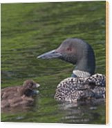 Loon Afternoon Wood Print