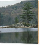 Loon At Black Lake Wood Print