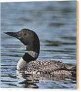 Loon In Blue Waters Wood Print