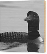 Loon In Calm Waters In Black And White Wood Print